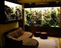 Reptile cage in living room _ reptilienkäfig im wohnzimmer _ c. - Reptile cage in living room _ reptilienkäfig im wohnzimmer _ cage à reptiles dan -