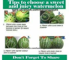 Picking the best watermelon
