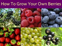 How To Grow Your Own Berries