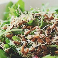 Reteta raw vegan: Salata nutritiva de iarna, cu germeni de grau si merisoare