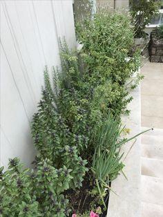 Horta orgânica  By Marisa Lima Lima, Plants, Vegetable Garden, Garden, Lime, Planters, Plant, Planting