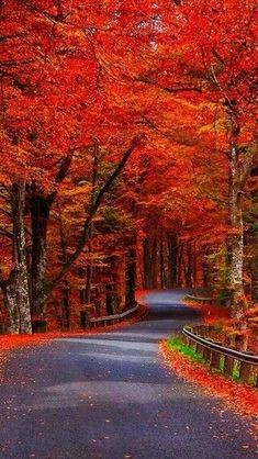 Autumn Beauty - Would make for a wonderful ride! Fall Pictures, Nature Pictures, Beautiful Places, Beautiful Pictures, Beautiful Roads, Beautiful Beautiful, Autumn Scenes, Nature Wallpaper, Autumn Leaves Wallpaper