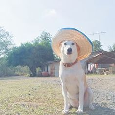 This Cheerful Dog Overcame Cancer And Now She Cant Stop Smiling - Meet gluta the smiling dog that beat cancer