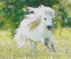 White Horse Watercolor Painting  Chureerat Bunngoen