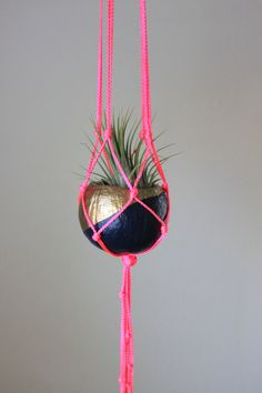 Neon Macrame Hanger with Tillandsia Air Plant by ThriftedandMade, $32.00