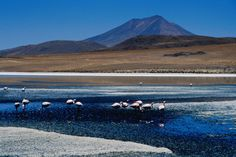 Generally gape in awe at the weirdness of the Bolivian salt lake ecosystem.  Pink Flamingos?  Sure, why not!