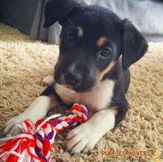 super schattig hondje met een bijttouw xx