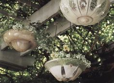 old, glass ceiling light covers as hanging planters