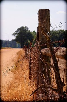 Dirt Road Anthem 5x7 Country Barbed Wire Georgia by dmcphotography, $20.00
