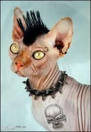 found the perf hairless cat!!!