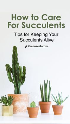 If you want to add in some natural beauty into your house, then succulents maybe the right choice for you. Here are some secret tips for caring your succulents
