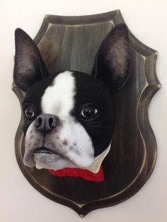 Boston Terrier Faux Taxidermy Head mount. by LisaPay on Etsy