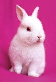 Bunny ✿⊱╮
