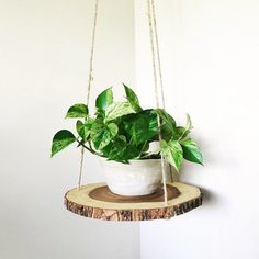 Wood slab slice floating hanging planter shelf table is part of Diy wood shelves This wood shelf suspends from the ceiling and gives any room a clean minimalist touch I like using it as a planter s - Diy Wood Shelves, Plant Shelves, Hanging Wood Shelves, House Plants Decor, Plant Decor, Bedroom Plants Decor, Deco Nature, Decoration Plante, Wood Slab