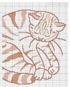 pillow_cat 2