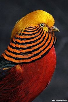 Animal Friend: AVES EXOTICAS