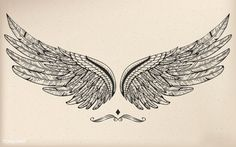 Vintage vector wing | Free Image by rawpixel.com