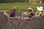 White Oak Lavender Farm - Home of My Lavender Lifestyle.  Come visit us in the beautiful Shenandoah Valley of Virginia