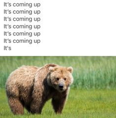 DARE! Not bear!