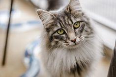 http://ift.tt/2qVOQl9 and kitten flea treatment advice.