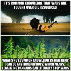 No, it won't! They would have wars over Cannabis