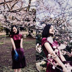 Ren Rong - Shein Velvet Dress - Sakura Saku