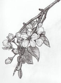 Elise Eiffe: Apple Blossom