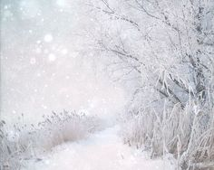 Icy white woodland trail, nature,  forest photo,  snow, landscape, home decor wall art - Winter Wonderland  8 x 10 on Etsy, $20.00