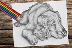 Printable coloring page, coloring book for adult, Adult Coloring Page, Instant d