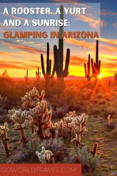 Open-Air Adventure: Glamping in Arizona Amazing Destinations, Vacation Destinations, Travel And Leisure, Travel Tips, Camping Glamping, Wanderlust Travel, Usa Travel, Family Travel, North America