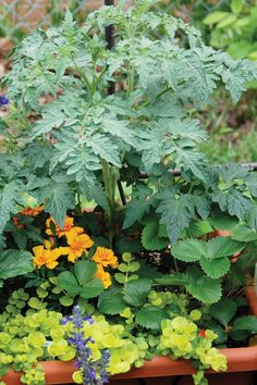 Grow Nutritious Foods in a Container Garden - Yard and Garden - Capper's Farmer