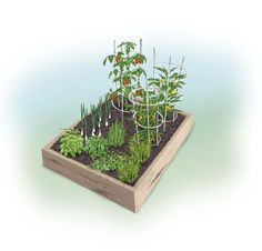 Pizza garden planting plan from Bonnie Plants.  AAS has oregano, basils, peppers & tomato winners perfect for this garden!