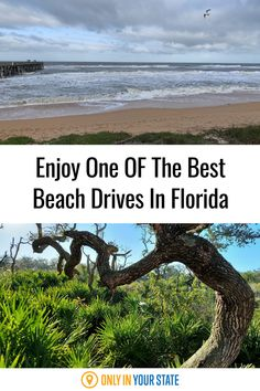 Drive or bike from the beach to the bay on this beautiful Florida road. Enjoy nature, without a hike!