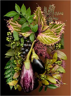 Brown Backgrounds - Eggplant and Coleus -Scanner Photography By Ellen Hoverkamp