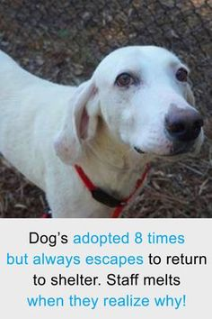 This dog always escaped to return back to the shelter after he was rescued - the staff melted when they realized why.  #dogs #pets #inspiring #heartwarming