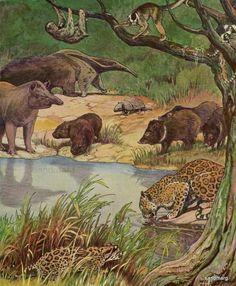 vintage prints mammals   Vintage Mammals of South America Lithograph Charles Livingston Bull