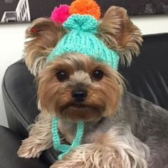 Trendy dogs and puppies yorkie yorkshire terrier Cute Puppies, Cute Dogs, Dogs And Puppies, Bulldog Puppies, Poodle Puppies, Yorkies, I Love Dogs, Puppy Love, Chien Yorkshire Terrier