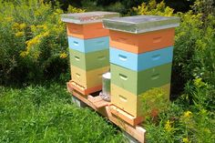"""""""GreenUP announces community beekeeping program"""" by Peter Hughes // B's Bees will bring together local beekeepers, farmers, and landowners"""