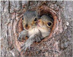 2 squirrels in holes