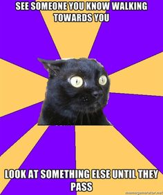 Unheard tale from Social Anxiety Cat. See the cool amazing and interesting funny info-graphics of Social Anxiety Cat. Its really a damn coo. Anxiety Cat Meme, Social Anxiety, Anxiety Humor, Anxiety Girl, Anxiety Quotes, New Job Anxiety, Bipolar Humor, Funny Animal Videos, Jokes