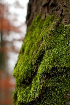 mossy tree macro - Hľadať Googlom Wood, Plants, Woodwind Instrument, Timber Wood, Trees, Plant, Planets