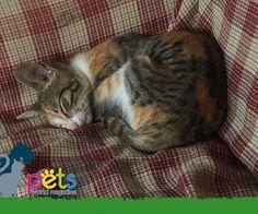 Buenas noches 🌝  #PetsWorldMagazine #RevistaDeMascotas #Panama #Gatos #GatosPty #GatosPanama #Mascotas #MascotasPty #MascotasPanama #MascotasAdorables #SuperTiernos #PicOfTheDay #Cats #CatLover #CatOfTheDay #Cute #PetsMagazine