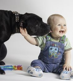 Secure Protection - Babies & Dogs