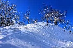 Castagneto con neve - http://www.erbaviola.com/2013/03/04/neve-che-si-scioglie-fili-di-paglia-che-arrivano-nellorto.htm