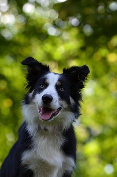How To Deal With Aggressive Dog Behavior Problems - Dog Health Care and Information Puppy Training Tips, Training Your Puppy, Potty Training, Training Dogs, Training Classes, Training School, Training Schedule, Training Online, Training Kit