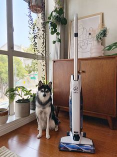 Best Pet Hair Vacuum, Pet Vacuum, Paws And Claws, Cordless Vacuum, Pet Odors, Reasons To Smile, How To Clean Carpet, Cute Animals, Pets