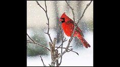 Molly Jhonson Red Cardinal