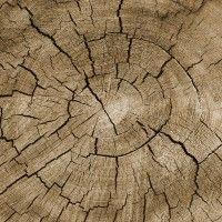 Tree Trunks, Wood Colors, Art Deco, Nature, Crafts, Beautiful, Naturaleza, Manualidades, Handmade Crafts