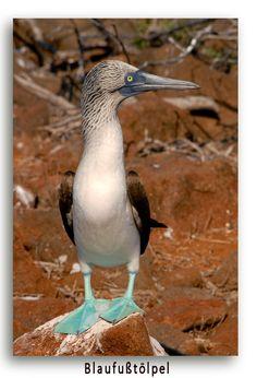 Von den Galapagos Inseln bis nach Rio . Südamerikas Vielfältigkeit ist einmalig.