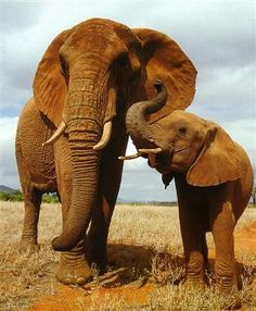 Elephant mom with her little one